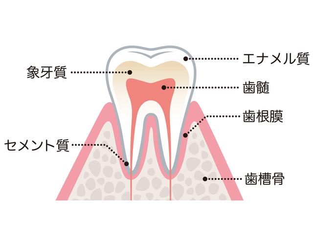 なぎさ歯科クリニック 根管治療とは?